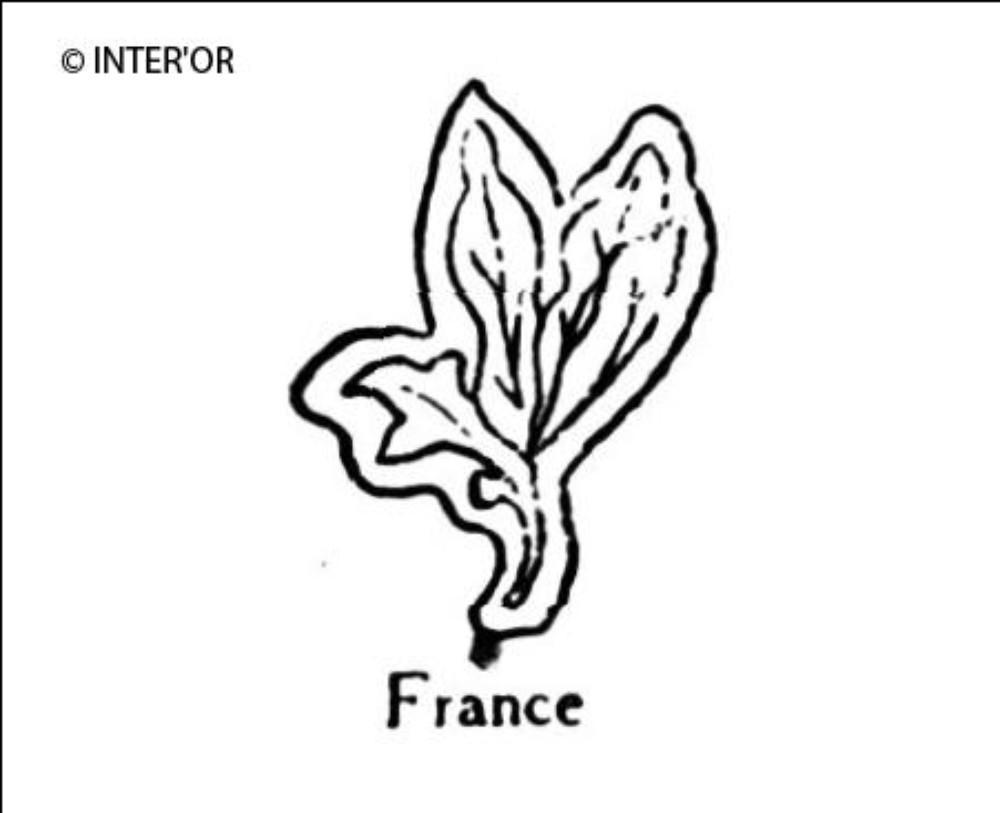 Branche de laurier a 3 feuilles