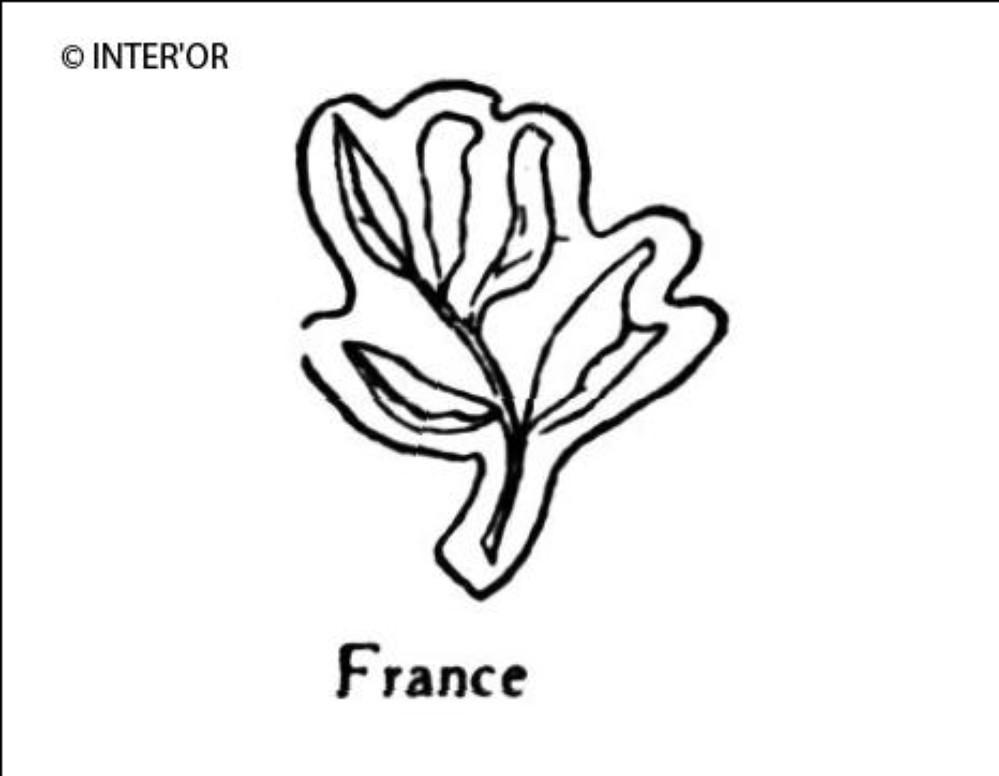 Branche de laurier de 6 feuilles