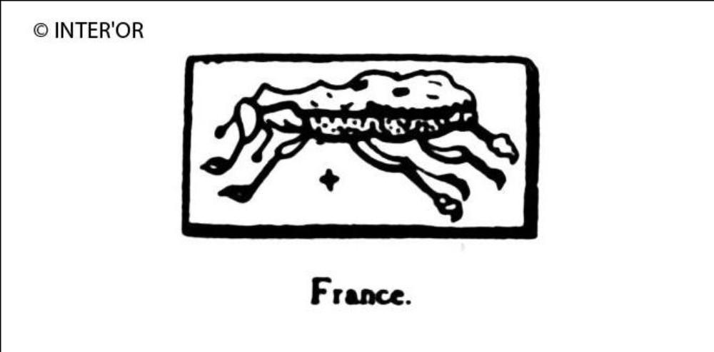 Charançon de 1893