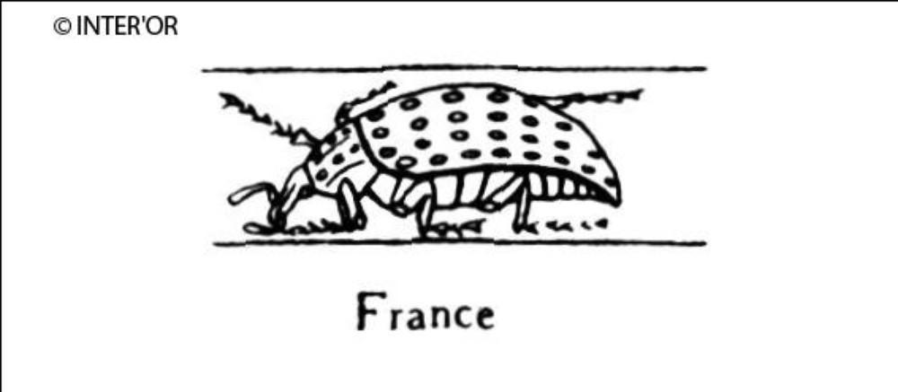 Charançon