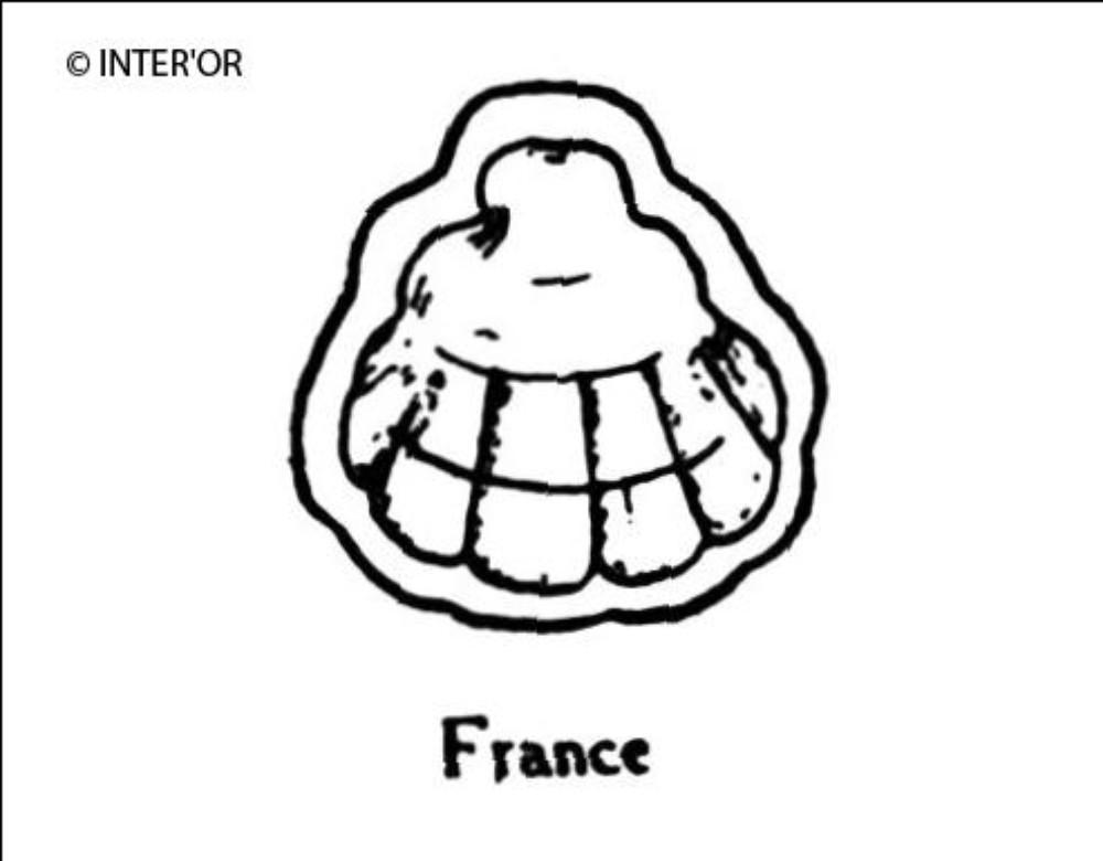 Coquille de saint-jacques