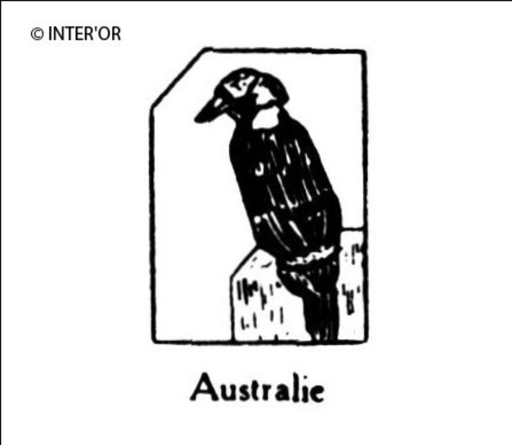 Martin-chasseur (kookaburra)