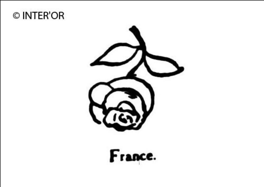 Rose renversee