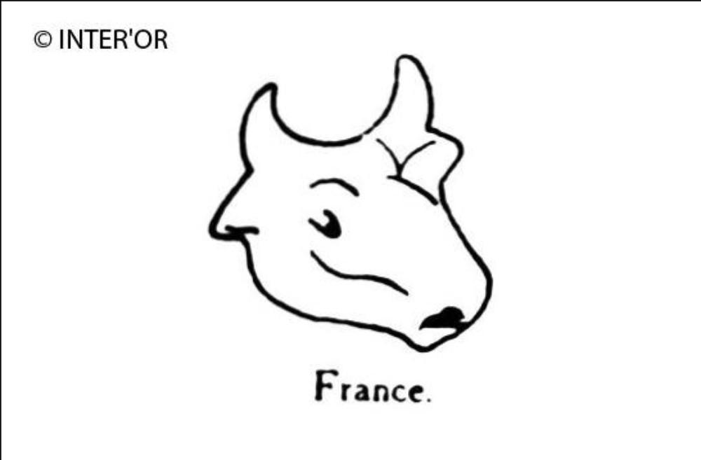 Tete de bœuf
