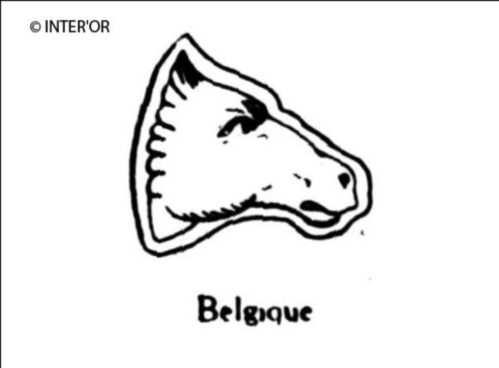 Tete de cheval