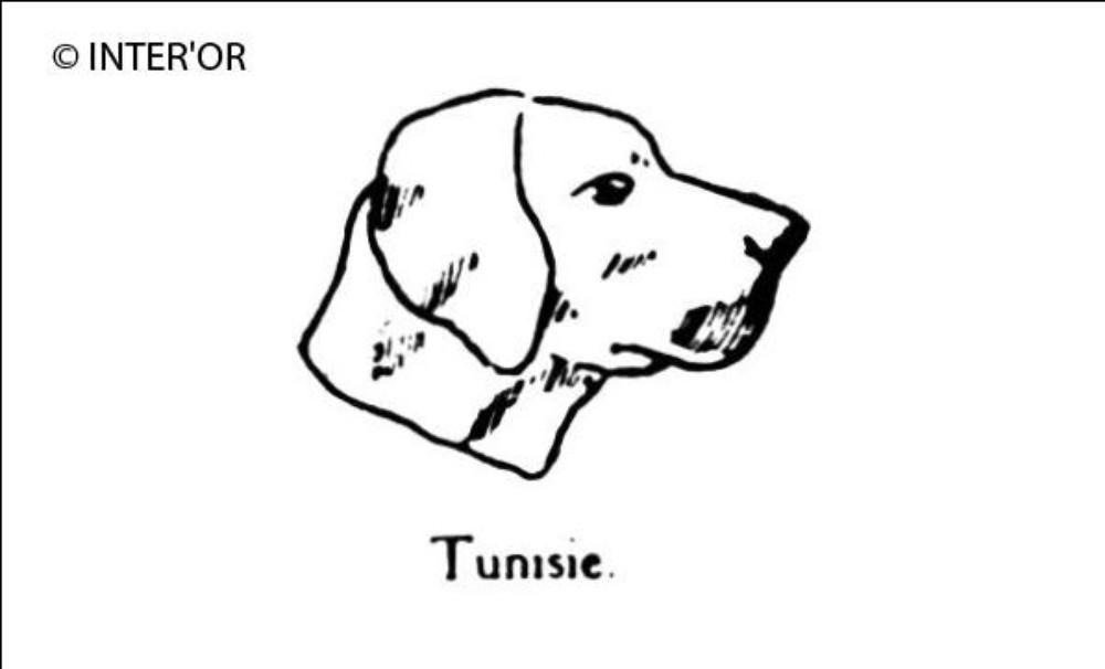 Tete de chien slougui