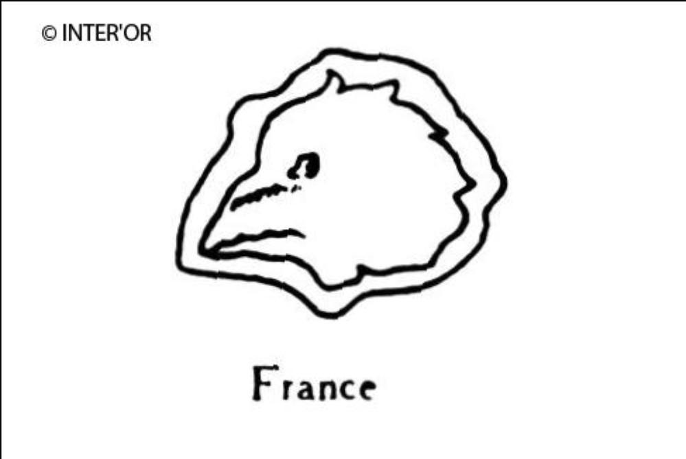 Tete de coq profil à gauche
