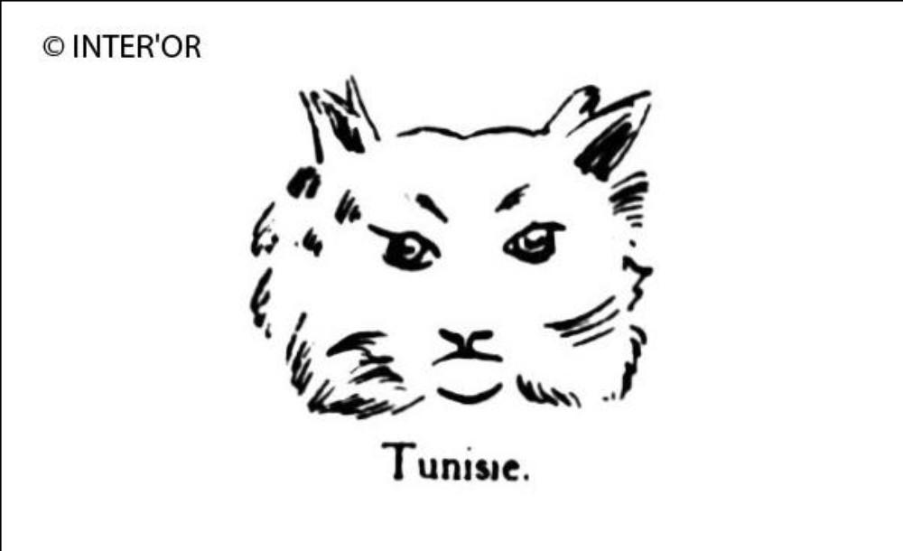Tete de lynx