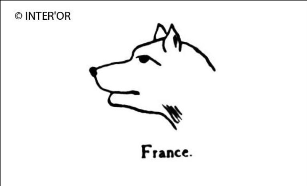 Tete de renard